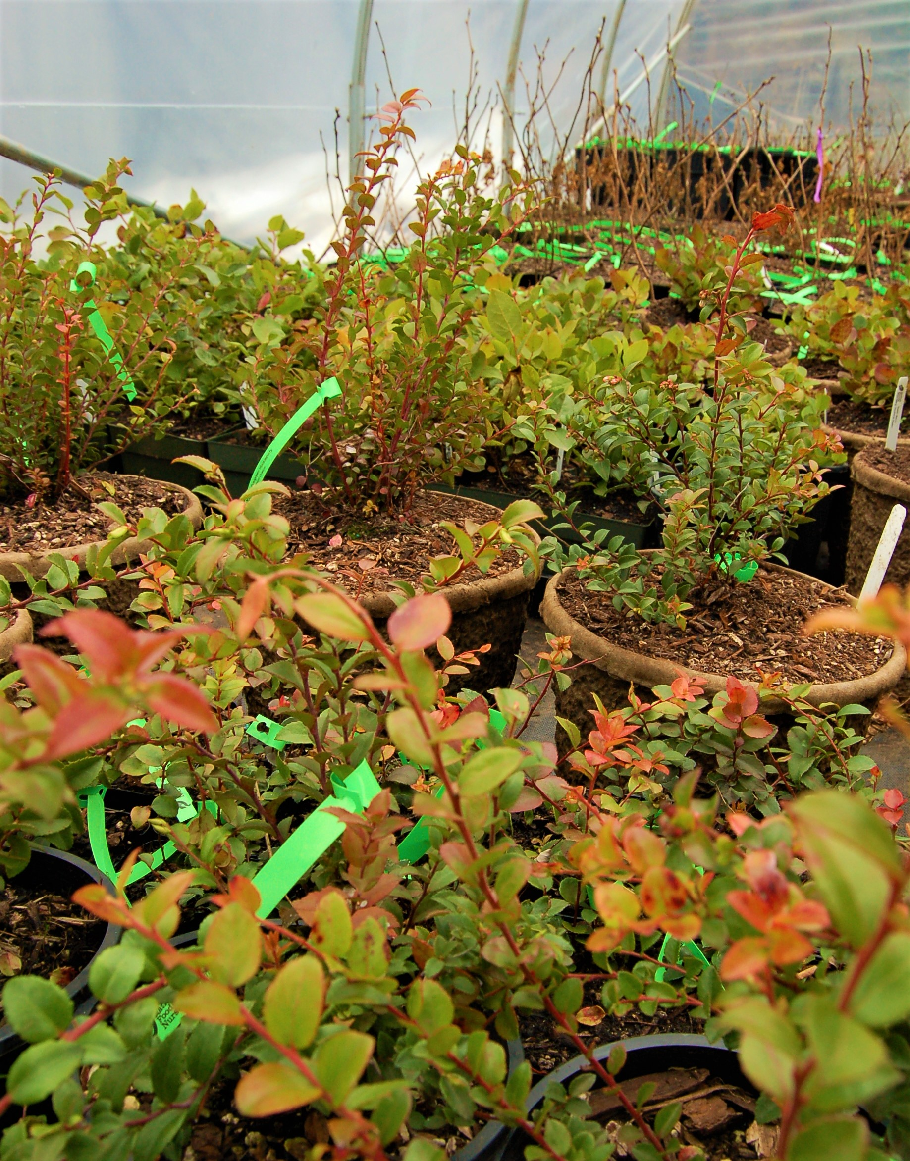About - Native Foods Nursery